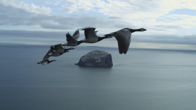 vídeos y material grabado en eventos de stock de air-to-air flying alongside line of 6 barnacle geese with sea and bass rock in background - grupo mediano de animales