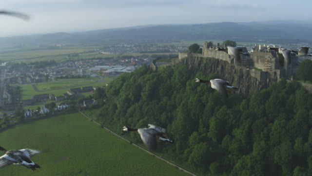 Air-to-air MS flying alongside line of Barnacle Geese with Stirling Castle in background