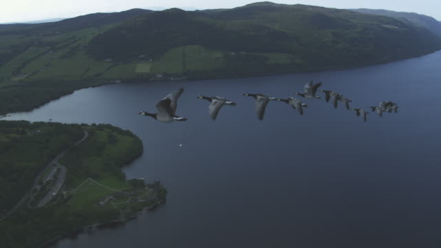 Air-to-air WS flying alongside line of Barnacle Geese with Urquhart castle Loch Ness and moorland in background