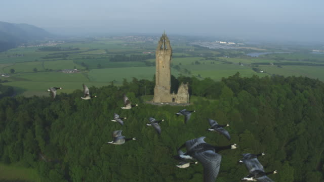 Air-to-air MS flying alongside line of Barnacle Geese with Wallace Monument in background