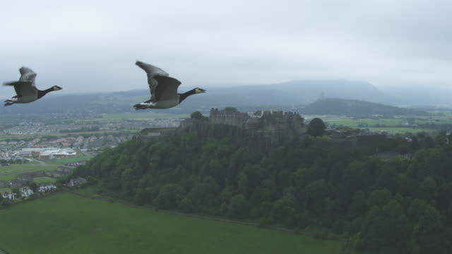 Air-to-air MS flying behind Barnacle Goose revealing group with Stirling Castle in background