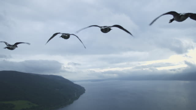 Air-to-air flying behind group of Barnacle Geese with Loch Ness then clear sky in background