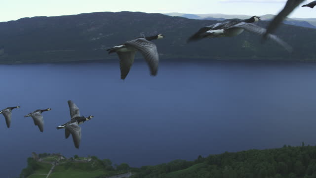 vídeos y material grabado en eventos de stock de air-to-air flying ms into cu alongside then behind group of barnacle geese with loch ness in background  - grupo mediano de animales