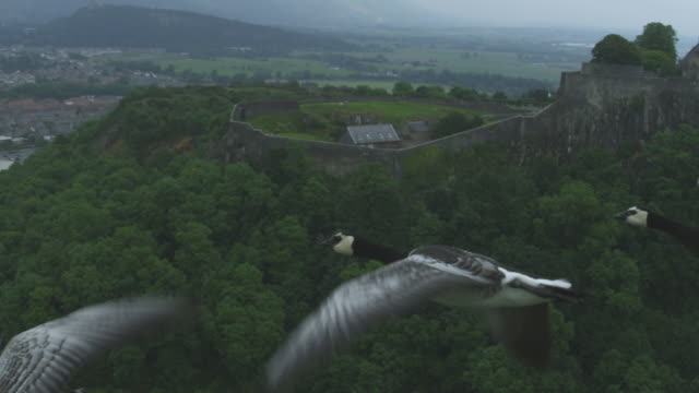 Air-to-air SLO MO MS flying with Barnacle Geese flying with Stirling Castle in background