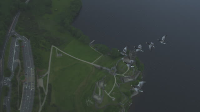 air-to-air ha ws into cu flying above 6 barnacle geese with urquhart castle and shore of loch ness in background  - ziehen stock-videos und b-roll-filmmaterial