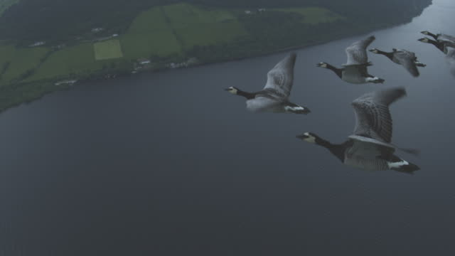 Air-to-air HA MS into CU flying alongside 6 Barnacle Geese changing places with Loch Ness in background