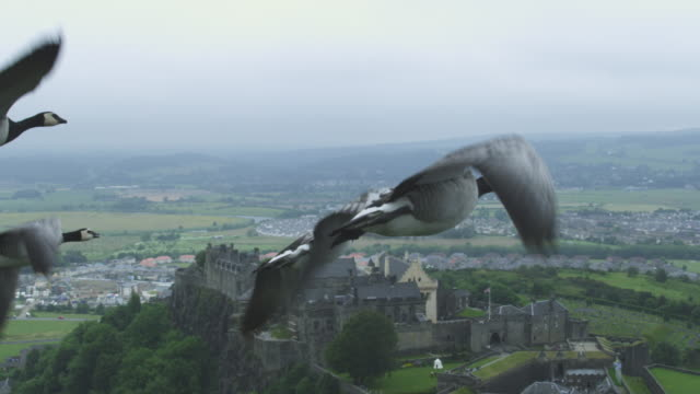 Air-to-air SLO MO MS into CU flying alongside and behind Barnacle Geese with Stirling Castle in background