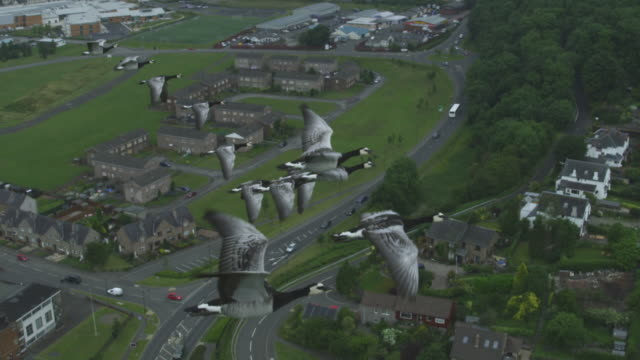 Air-to-air SLO MO MS into CU flying alongside and behind Barnacle Geese with suburban housing then Stirling Castle in background