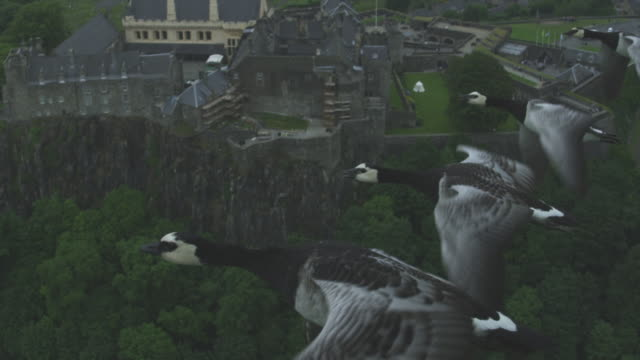 Air-to-air SLO MO MS into CU flying alongside Barnacle Geese changing places with Stirling Castle in background