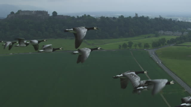 Air-to-air SLO MO MS into CU flying alongside Barnacle Geese with Stirling Castle in background
