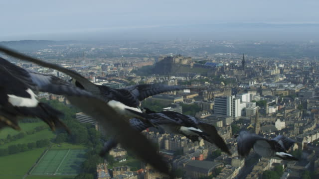Air-to-air SLO MO WS into CU flying alongside group of Barnacle Geese with Edinburgh city housing then castle in background