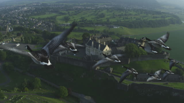 Air-to-air MS into CU flying alongside group of Barnacle Geese with Stirling Castle in background