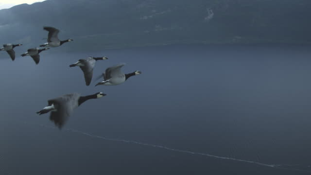 Air-to-air WS into CU flying alongside line of 6 Barnacle Geese with Loch Ness in background