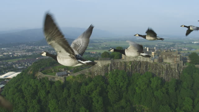 Air-to-air MS into CU flying alongside line of Barnacle Geese with Stirling Castle in background