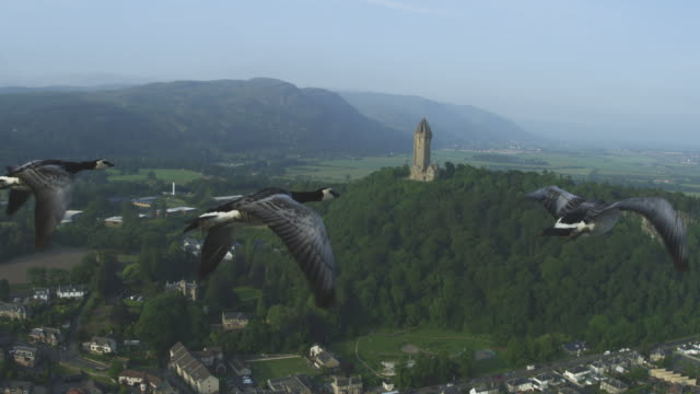 Air-to-air MS into CU flying alongside then behind Barnacle Geese with Wallace Monument in background
