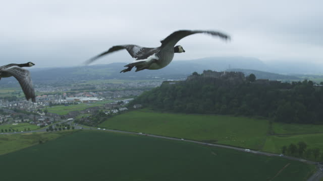 Air-to-air MS into CU flying behind Barnacle Goose with Stirling Castle in background