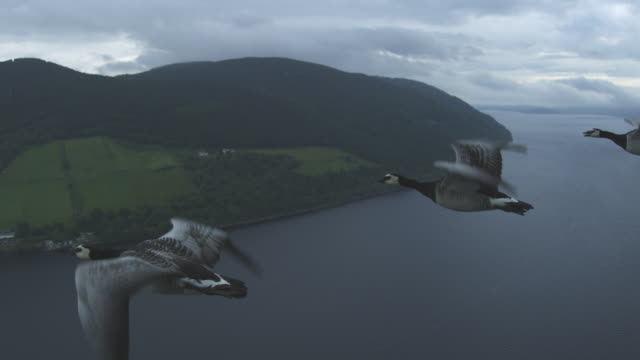air-to-air ws into cu with 6 barnacle geese crossing frame and rising with moors and shore of loch ness in background  - ziehen stock-videos und b-roll-filmmaterial