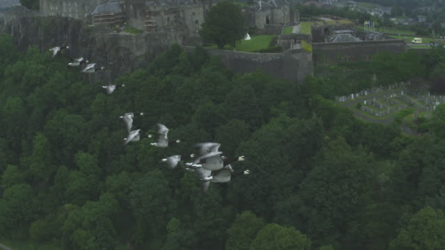 Air-to-air SLO MO Stirling Castle TD to Barnacle Geese flying with castle in background
