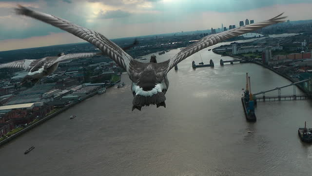 air-to-air track behind 3 barnacle geese flying over river thames towards thames barrier - limb body part stock videos & royalty-free footage