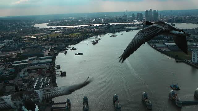 air-to-air track behind 3 barnacle geese flying over river thames towards thames barrier - three animals stock videos & royalty-free footage