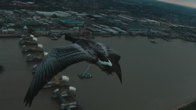 air-to-air track behind 3 barnacle geese flying over thames barrier - three animals stock videos & royalty-free footage