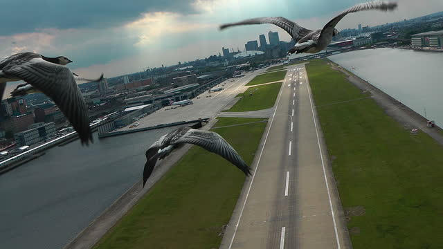 air-to-air track behind 4 barnacle geese flying over london city airport - small group of animals stock videos & royalty-free footage