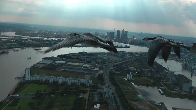 air-to-air track behind 4 barnacle geese flying over london docklands towards thames barrier - small group of animals stock videos & royalty-free footage
