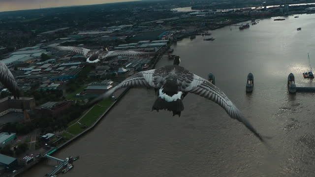 air-to-air track behind 4 barnacle geese flying over river thames towards thames barrier - small group of animals stock videos & royalty-free footage