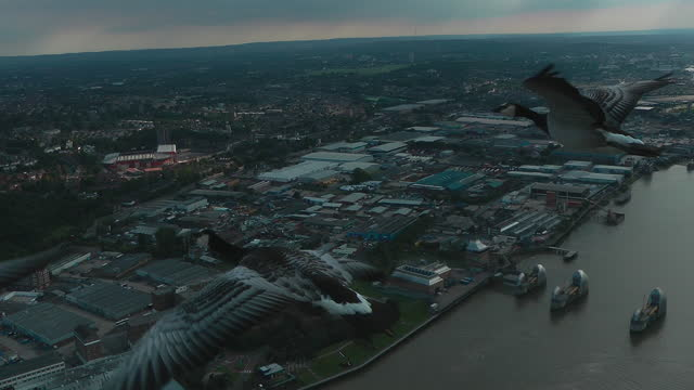 air-to-air track with 3 barnacle geese flying over london docklands - small group of animals stock videos & royalty-free footage