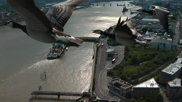 air-to-air track with 3 barnacle geese flying over woolwich ferry - three animals stock videos & royalty-free footage