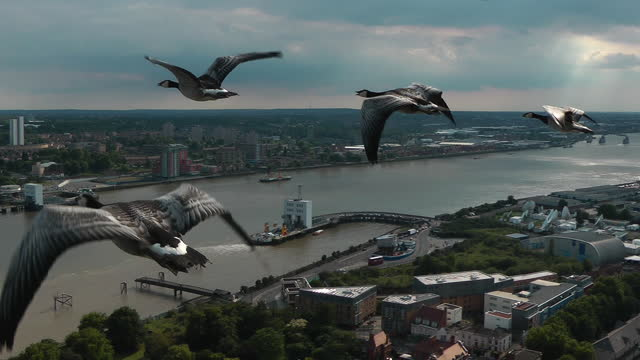 air-to-air track with 5 barnacle geese flying over woolwich ferry - small group of animals stock videos & royalty-free footage