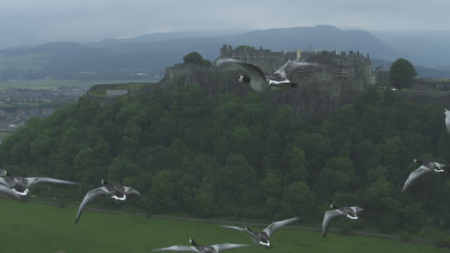 Air-to-air SLO MO MS tracking along behind line of Barnacle Geese flying with Stirling Castle in background
