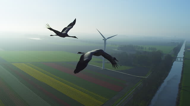 air-to-air tracking with 2 common cranes flying over fields past wind turbine in hazy backlight - two animals stock videos & royalty-free footage