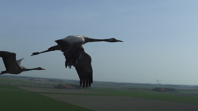 air-to-air tracking with 2 common cranes flying over fields then tu - two animals stock videos & royalty-free footage
