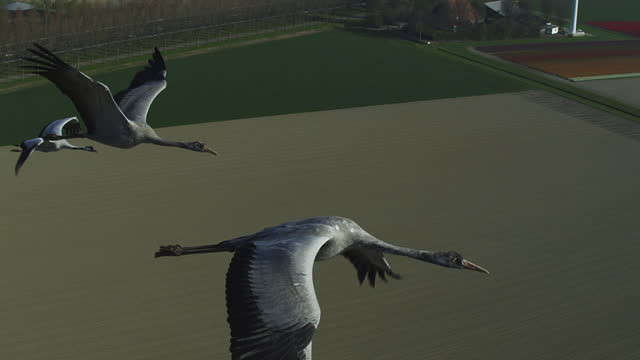 air-to-air tracking with 3 common cranes flying over fields past wind turbine - 北ホラント州点の映像素材/bロール