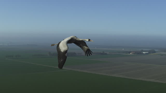 air-to-air tracking with common crane flying over fields then joined by second crane - animal migration stock videos & royalty-free footage