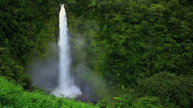 WS Akaka Falls plunges 442 feet into basin of waterfall, waterfall covered with tropical forest / Honomu, Hawaii, USA