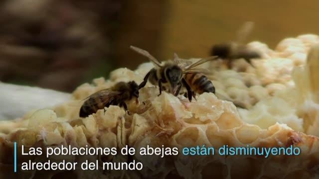 stockvideo's en b-roll-footage met al ser un pais libre de pesticidas las abejas de cuba producen una miel con una calidad muy requerida en europa - agricultura