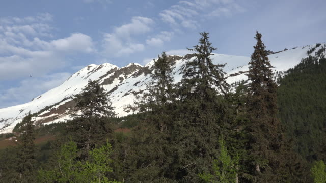 Alaska Alyeska mountain and evergreens