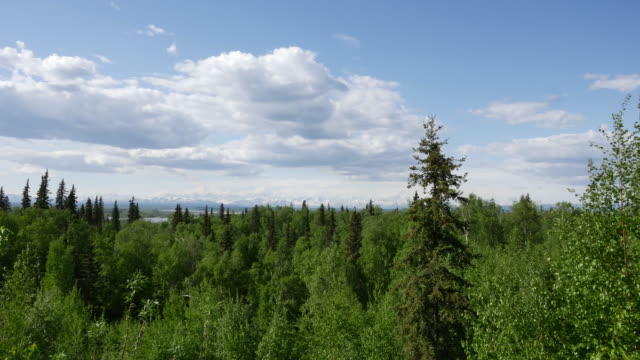 Alaska boreal forest and clouds