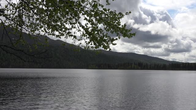 Alaska branch frames mountain lake pan