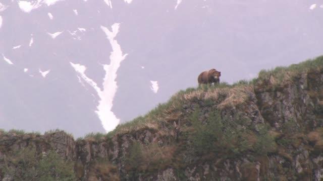 MS, LA, USA, Alaska, Katmai National Park, Brown bear (Ursus Arctos) walking on crest of rocky hill