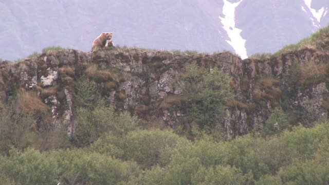 ms, la, usa, alaska, katmai national park, brown bear (ursus arctos) with cub on crest of rocky hill - animal's crest stock videos and b-roll footage