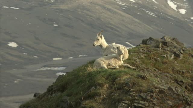 alaska mckinley - denali national park stock videos & royalty-free footage