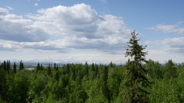Alaska northern forest and puffy clouds