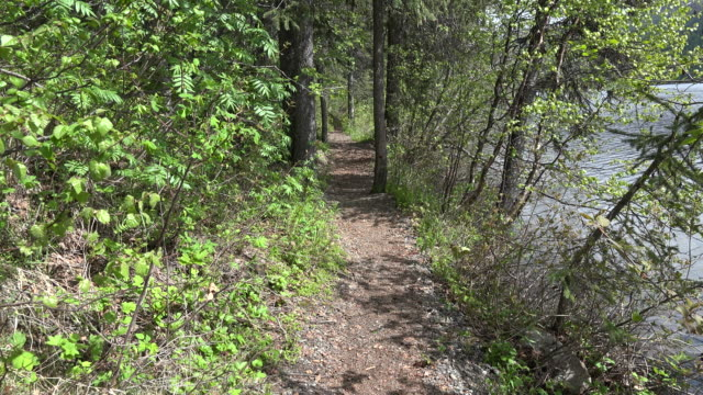 Alaska path in forest
