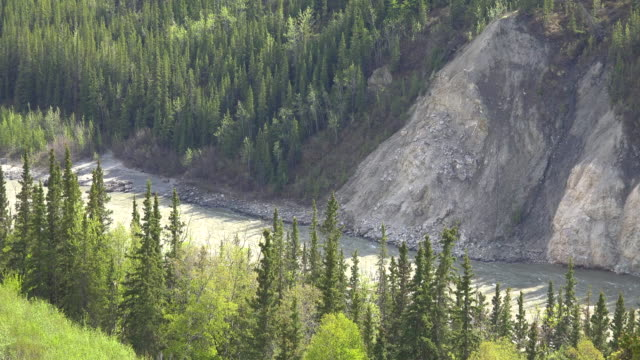 alaska river and spruce trees - denali national park stock videos & royalty-free footage