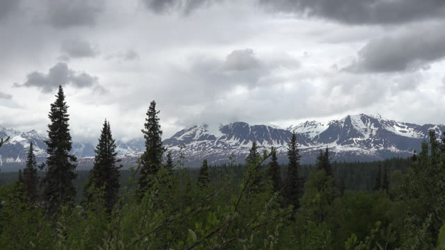 Alaska trees and dark clouds zoom in