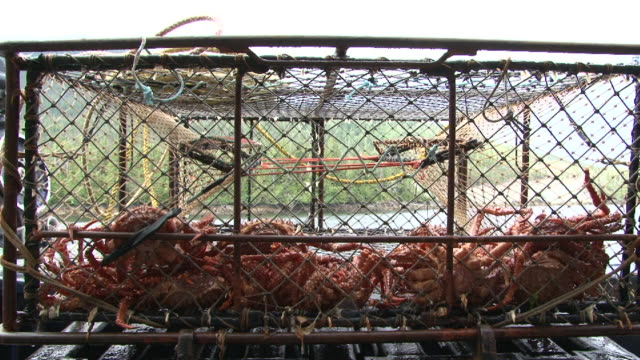 alaskan crab pot launch - crab stock videos and b-roll footage