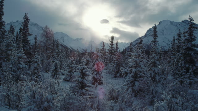Alaskan forest and mountains after snowfall.
